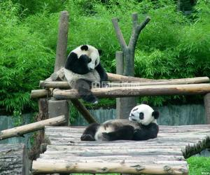 灾后生态:熊猫等动植物现状不明
