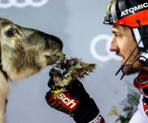 高山滑雪名将希尔斯赫夺生涯第59冠 奖品竟是一只驯鹿!