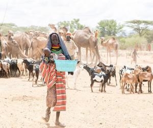 肯尼亚遇极度干旱 部族妇女每天跋涉20公里找水源